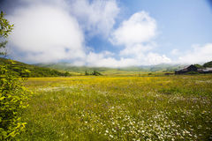 Summer meadow and deep blue sky Royalty Free Stock Image