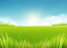 Summer meadow field. Nature background with sun, sunny rays, grass landscape. Summer meadow field. Nature background with sun, sunny rays, green grass landscape royalty free illustration