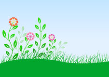Summer meadow with flowers. Vector illustration of summer meadow with flowers Stock Photography