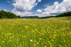 Summer meadow with flowers and blue sky with clouds Stock Photo
