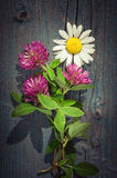 Summer meadow flowers bouquet. Floral composition in rural style Royalty Free Stock Images