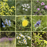 Summer meadow flowers. Collage. Stock Photo