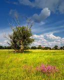 Summer meadow with flowers and tree Royalty Free Stock Photos