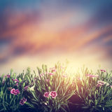 Summer meadow flowers in grass at sunset. Vintage Stock Photos