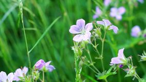 Summer meadow flowers stock video