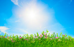Summer meadow flowers in green grass, sunny blue sky Royalty Free Stock Images