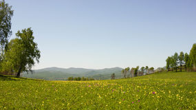 Summer meadow with flowers royalty free stock photo