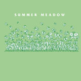 Summer meadow flowers vector illustration. Stock Images