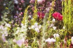Summer meadow flowers Stock Image