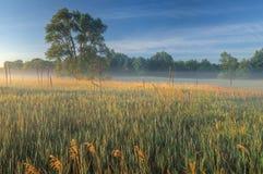 Summer Meadow in Fog Stock Photos