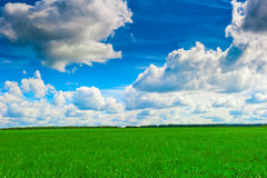 Summer meadow and forest on the horizon Royalty Free Stock Images