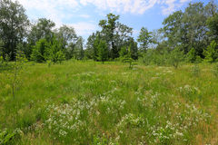 Summer meadow in forest Stock Photos