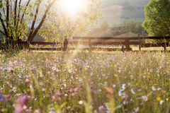 Summer meadow full with daisies after rain Stock Images