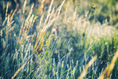 Summer meadow, grass field in warm sunlight, nature background concept, soft focus, warm pastel tones Stock Photography
