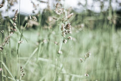 Summer meadow grass Stock Photos