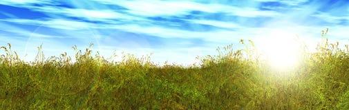 Summer meadow, grass panorama Stock Photos
