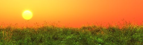 Summer meadow, grass panorama Royalty Free Stock Images