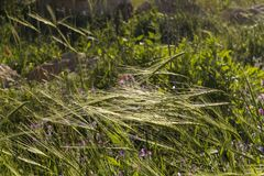 Summer meadow grass with Wild flowers in sunset . Bokeh natural. Background Stock Image