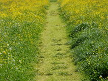 Summer Meadow With Green Grass And Path Stock Images