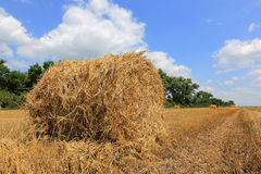 Summer meadow with hayrolls Royalty Free Stock Photography