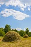 Summer meadow with haystacks Stock Images
