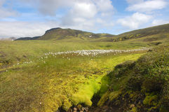Summer meadow in Iceland. Meadow in the middle part of  Landmannalaugar trek in Iceland Stock Image