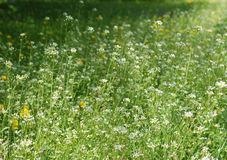 Summer meadow Stock Photos