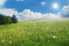 Free Summer Meadow Landscape Royalty Free Stock Photos - 14629858