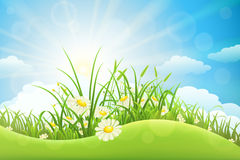 Summer meadow landscape Royalty Free Stock Image