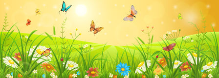 Summer meadow landscape Royalty Free Stock Photo