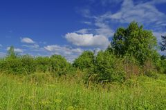 Summer meadow landscape with green grass and wild flowers. Against a background of forest and blue sky with white clouds royalty free stock photos