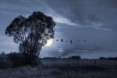 Summer meadow in moonlight Stock Photo