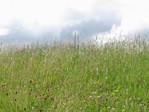 Summer meadow panorama Royalty Free Stock Image