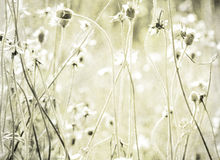 Summer meadow print on stone background Royalty Free Stock Photo