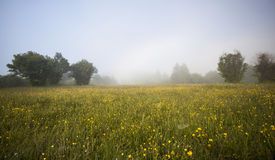 Summer meadow after rain Royalty Free Stock Photography