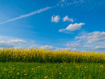 Summer meadow and rapeseed field with blue sky Stock Images