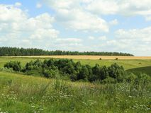 Summer meadow in Russia Royalty Free Stock Image