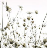 Summer meadow silhouettes art background Stock Photo
