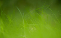 Summer meadow in soft morning light Royalty Free Stock Images