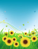 Summer meadow, sunflowers field and butterflies. Vector illustration Royalty Free Stock Image