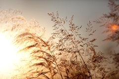 Summer meadow at sunset Royalty Free Stock Images