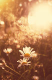 Summer meadow in the sunset Royalty Free Stock Images