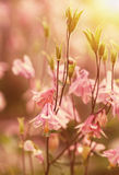 Summer meadow in the sunset Royalty Free Stock Photo