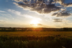 Summer meadow before sunset landscape Stock Photography