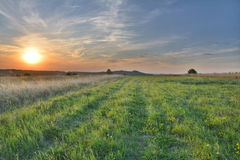 Summer meadow sunset Stock Photography