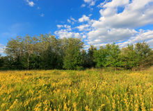 Summer meadow under blue sky Royalty Free Stock Photography