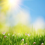 Summer meadow under bright yellow sun Stock Photo