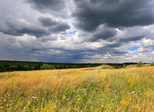 Summer meadow under dark clouds Royalty Free Stock Image
