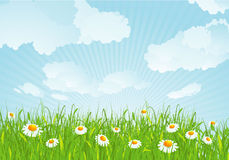 Summer meadow. Vector background. Royalty Free Stock Images