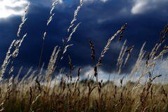Summer meadow. A view of the grass on the summer meadow stock image